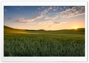 Sun, Wheat Fields near Palouse, Washington Ultra HD Wallpaper for 4K UHD Widescreen desktop, tablet & smartphone