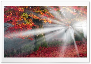 Sunbeams, Mist, Forest, Autumn HD Wide Wallpaper for 4K UHD Widescreen desktop & smartphone