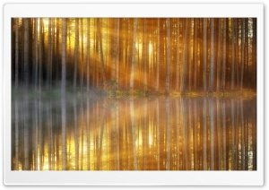 Sunbeams through Forest Trees, Lake Reflection HD Wide Wallpaper for 4K UHD Widescreen desktop & smartphone