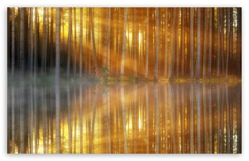 Download Sunbeams through Forest Trees, Lake Reflection HD Wallpaper