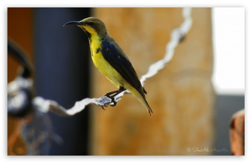 Sunbird - Shoaib Photography - ❤ 4K UHD Wallpaper for Wide 16:10 5:3 Widescreen WHXGA WQXGA WUXGA WXGA WGA ; Standard 4:3 3:2 Fullscreen UXGA XGA SVGA DVGA HVGA HQVGA ( Apple PowerBook G4 iPhone 4 3G 3GS iPod Touch ) ; Smartphone 5:3 WGA ; Tablet 1:1 ; iPad 1/2/Mini ; Mobile 4:3 5:3 3:2 - UXGA XGA SVGA WGA DVGA HVGA HQVGA ( Apple PowerBook G4 iPhone 4 3G 3GS iPod Touch ) ;