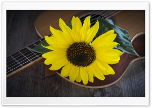 Sunflower, Acoustic Guitar HD Wide Wallpaper for 4K UHD Widescreen desktop & smartphone