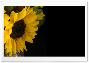 Sunflower and Kale in a Vase HD Wide Wallpaper for Widescreen