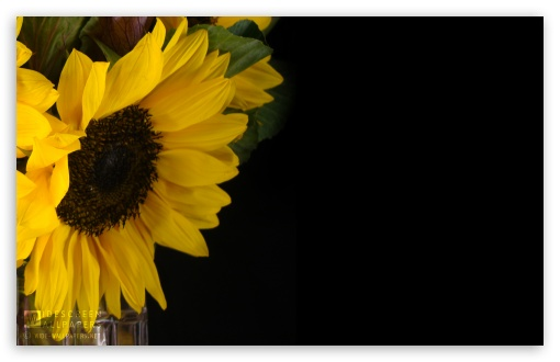 Sunflower and Kale in a Vase HD wallpaper for Wide 16:10 5:3 Widescreen WHXGA WQXGA WUXGA WXGA WGA ; HD 16:9 High Definition WQHD QWXGA 1080p 900p 720p QHD nHD ; Standard 4:3 5:4 3:2 Fullscreen UXGA XGA SVGA QSXGA SXGA DVGA HVGA HQVGA devices ( Apple PowerBook G4 iPhone 4 3G 3GS iPod Touch ) ; Tablet 1:1 ; iPad 1/2/Mini ; Mobile 4:3 5:3 3:2 5:4 - UXGA XGA SVGA WGA DVGA HVGA HQVGA devices ( Apple PowerBook G4 iPhone 4 3G 3GS iPod Touch ) QSXGA SXGA ;
