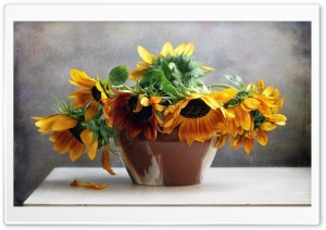 Sunflowers On The Table HD Wide Wallpaper for Widescreen