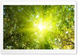 Sunlight HD Wide Wallpaper for Widescreen