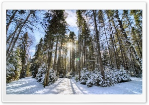 Sunlight In The Forest HD Wide Wallpaper for Widescreen