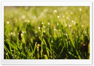 Sunlight In The Grass HD Wide Wallpaper for Widescreen