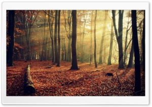 Sunlight Through Forest HD Wide Wallpaper for Widescreen