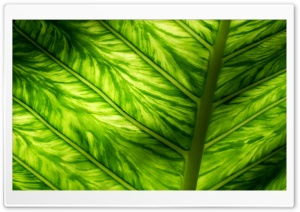 Sunlight Through Leaf Macro HD Wide Wallpaper for Widescreen