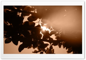 Sunlight Through Leaves HD Wide Wallpaper for Widescreen