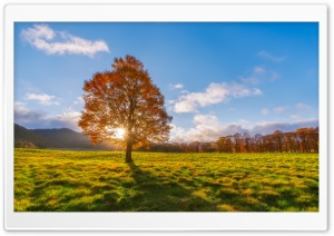 Sunlight Through Tree HD Wide Wallpaper for Widescreen