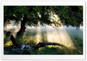 Sunlight Through Tree HD Wide Wallpaper for 4K UHD Widescreen desktop & smartphone