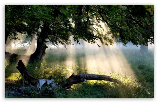 Sunlight Through Tree HD wallpaper for Wide 16:10 5:3 Widescreen WHXGA WQXGA WUXGA WXGA WGA ; HD 16:9 High Definition WQHD QWXGA 1080p 900p 720p QHD nHD ; Standard 4:3 5:4 3:2 Fullscreen UXGA XGA SVGA QSXGA SXGA DVGA HVGA HQVGA devices ( Apple PowerBook G4 iPhone 4 3G 3GS iPod Touch ) ; Tablet 1:1 ; iPad 1/2/Mini ; Mobile 4:3 5:3 3:2 16:9 5:4 - UXGA XGA SVGA WGA DVGA HVGA HQVGA devices ( Apple PowerBook G4 iPhone 4 3G 3GS iPod Touch ) WQHD QWXGA 1080p 900p 720p QHD nHD QSXGA SXGA ;