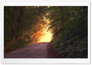 Sunlight Through Trees HD Wide Wallpaper for Widescreen