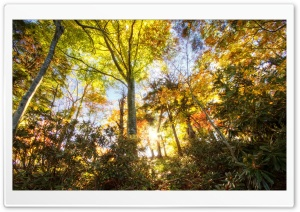Sunlight Through Trees HD Wide Wallpaper for Widescreen