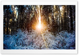 Sunlight Through Trees, Winter HD Wide Wallpaper for Widescreen