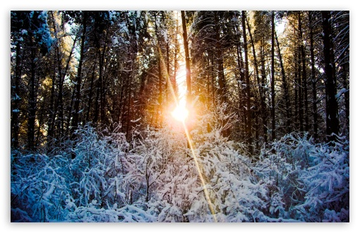 Sunlight Through Trees, Winter HD wallpaper for Wide 16:10 5:3 Widescreen WHXGA WQXGA WUXGA WXGA WGA ; HD 16:9 High Definition WQHD QWXGA 1080p 900p 720p QHD nHD ; Standard 4:3 5:4 3:2 Fullscreen UXGA XGA SVGA QSXGA SXGA DVGA HVGA HQVGA devices ( Apple PowerBook G4 iPhone 4 3G 3GS iPod Touch ) ; Tablet 1:1 ; iPad 1/2/Mini ; Mobile 4:3 5:3 3:2 16:9 5:4 - UXGA XGA SVGA WGA DVGA HVGA HQVGA devices ( Apple PowerBook G4 iPhone 4 3G 3GS iPod Touch ) WQHD QWXGA 1080p 900p 720p QHD nHD QSXGA SXGA ; Dual 16:10 5:3 16:9 4:3 5:4 WHXGA WQXGA WUXGA WXGA WGA WQHD QWXGA 1080p 900p 720p QHD nHD UXGA XGA SVGA QSXGA SXGA ;