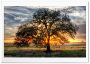 Sunlight Tree HD Wide Wallpaper for Widescreen