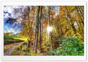 Sunlighted Forest HDR HD Wide Wallpaper for 4K UHD Widescreen desktop & smartphone