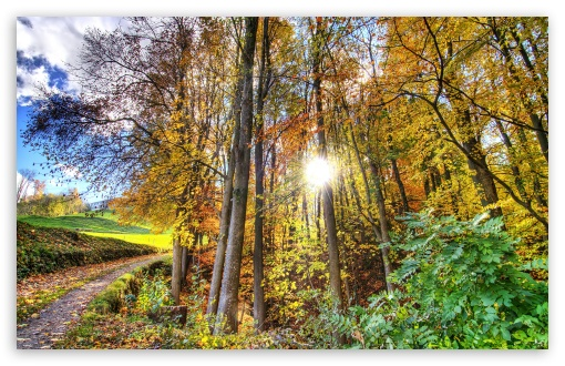 Sunlighted Forest HDR HD wallpaper for Wide 16:10 5:3 Widescreen WHXGA WQXGA WUXGA WXGA WGA ; HD 16:9 High Definition WQHD QWXGA 1080p 900p 720p QHD nHD ; UHD 16:9 WQHD QWXGA 1080p 900p 720p QHD nHD ; Standard 4:3 5:4 3:2 Fullscreen UXGA XGA SVGA QSXGA SXGA DVGA HVGA HQVGA devices ( Apple PowerBook G4 iPhone 4 3G 3GS iPod Touch ) ; Tablet 1:1 ; iPad 1/2/Mini ; Mobile 4:3 5:3 3:2 16:9 5:4 - UXGA XGA SVGA WGA DVGA HVGA HQVGA devices ( Apple PowerBook G4 iPhone 4 3G 3GS iPod Touch ) WQHD QWXGA 1080p 900p 720p QHD nHD QSXGA SXGA ; Dual 16:10 5:3 4:3 5:4 WHXGA WQXGA WUXGA WXGA WGA UXGA XGA SVGA QSXGA SXGA ;