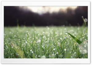 Sunlighted Grass HD Wide Wallpaper for Widescreen