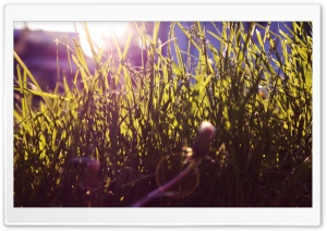 Sunlighted Grass Ultra HD Wallpaper for 4K UHD Widescreen desktop, tablet & smartphone