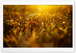 Sunlighted Grass, Summer HD Wide Wallpaper for 4K UHD Widescreen desktop & smartphone