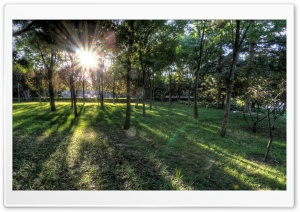 Sunlit Grove in Downtown Beijing HD Wide Wallpaper for Widescreen