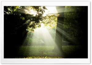 Sunny And Foggy Morning HD Wide Wallpaper for Widescreen