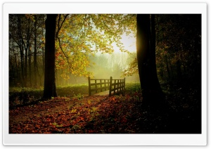 Sunny Fall Day HD Wide Wallpaper for Widescreen