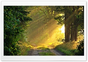 Sunny Morning, Forest Path HD Wide Wallpaper for 4K UHD Widescreen desktop & smartphone