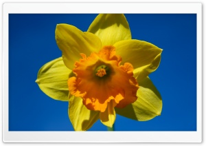Sunny Spring HD Wide Wallpaper for Widescreen