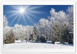 Sunny Winter Day HD Wide Wallpaper for Widescreen