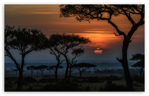 Sunrise in Masai Mara, Kenya, Africa ❤ 4K UHD Wallpaper for Wide 16:10 5:3 Widescreen WHXGA WQXGA WUXGA WXGA WGA ; UltraWide 21:9 24:10 ; 4K UHD 16:9 Ultra High Definition 2160p 1440p 1080p 900p 720p ; UHD 16:9 2160p 1440p 1080p 900p 720p ; Standard 4:3 5:4 3:2 Fullscreen UXGA XGA SVGA QSXGA SXGA DVGA HVGA HQVGA ( Apple PowerBook G4 iPhone 4 3G 3GS iPod Touch ) ; Smartphone 16:9 3:2 5:3 2160p 1440p 1080p 900p 720p DVGA HVGA HQVGA ( Apple PowerBook G4 iPhone 4 3G 3GS iPod Touch ) WGA ; Tablet 1:1 ; iPad 1/2/Mini ; Mobile 4:3 5:3 3:2 16:9 5:4 - UXGA XGA SVGA WGA DVGA HVGA HQVGA ( Apple PowerBook G4 iPhone 4 3G 3GS iPod Touch ) 2160p 1440p 1080p 900p 720p QSXGA SXGA ;