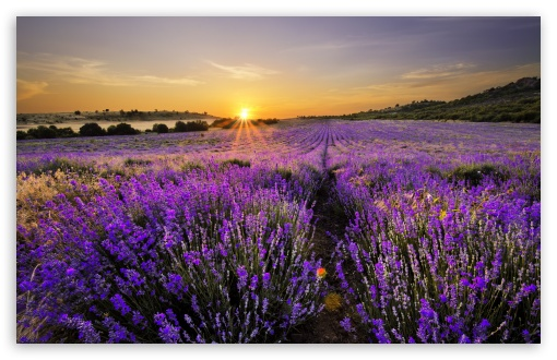 Sunrise In The Field Of Lavenders ❤ 4K UHD Wallpaper for Wide 16:10 5:3 Widescreen WHXGA WQXGA WUXGA WXGA WGA ; 4K UHD 16:9 Ultra High Definition 2160p 1440p 1080p 900p 720p ; Standard 4:3 5:4 3:2 Fullscreen UXGA XGA SVGA QSXGA SXGA DVGA HVGA HQVGA ( Apple PowerBook G4 iPhone 4 3G 3GS iPod Touch ) ; Smartphone 5:3 WGA ; Tablet 1:1 ; iPad 1/2/Mini ; Mobile 4:3 5:3 3:2 16:9 5:4 - UXGA XGA SVGA WGA DVGA HVGA HQVGA ( Apple PowerBook G4 iPhone 4 3G 3GS iPod Touch ) 2160p 1440p 1080p 900p 720p QSXGA SXGA ; Dual 16:10 5:3 16:9 4:3 5:4 WHXGA WQXGA WUXGA WXGA WGA 2160p 1440p 1080p 900p 720p UXGA XGA SVGA QSXGA SXGA ;