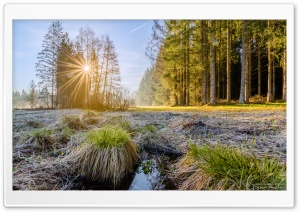 Sunrise, Sun Rays Morning, Forest, Trees Ultra HD Wallpaper for 4K UHD Widescreen desktop, tablet & smartphone