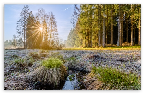 Sunrise, Sun Rays Morning, Forest, Trees UltraHD Wallpaper for Wide 16:10 5:3 Widescreen WHXGA WQXGA WUXGA WXGA WGA ; 8K UHD TV 16:9 Ultra High Definition 2160p 1440p 1080p 900p 720p ; UHD 16:9 2160p 1440p 1080p 900p 720p ; Standard 3:2 Fullscreen DVGA HVGA HQVGA ( Apple PowerBook G4 iPhone 4 3G 3GS iPod Touch ) ; Mobile 5:3 3:2 16:9 - WGA DVGA HVGA HQVGA ( Apple PowerBook G4 iPhone 4 3G 3GS iPod Touch ) 2160p 1440p 1080p 900p 720p ;