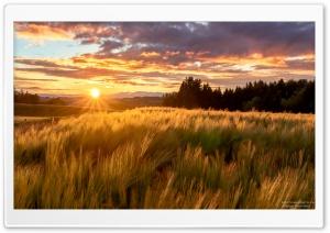 Sunset Ultra HD Wallpaper for 4K UHD Widescreen desktop, tablet & smartphone
