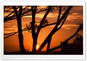 Sunset Behind Tree Branches HD Wide Wallpaper for Widescreen