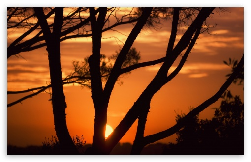 Sunset Behind Tree Branches HD wallpaper for Wide 16:10 5:3 Widescreen WHXGA WQXGA WUXGA WXGA WGA ; HD 16:9 High Definition WQHD QWXGA 1080p 900p 720p QHD nHD ; UHD 16:9 WQHD QWXGA 1080p 900p 720p QHD nHD ; Standard 4:3 5:4 3:2 Fullscreen UXGA XGA SVGA QSXGA SXGA DVGA HVGA HQVGA devices ( Apple PowerBook G4 iPhone 4 3G 3GS iPod Touch ) ; Tablet 1:1 ; iPad 1/2/Mini ; Mobile 4:3 5:3 3:2 16:9 5:4 - UXGA XGA SVGA WGA DVGA HVGA HQVGA devices ( Apple PowerBook G4 iPhone 4 3G 3GS iPod Touch ) WQHD QWXGA 1080p 900p 720p QHD nHD QSXGA SXGA ; Dual 16:10 5:3 16:9 4:3 5:4 WHXGA WQXGA WUXGA WXGA WGA WQHD QWXGA 1080p 900p 720p QHD nHD UXGA XGA SVGA QSXGA SXGA ;