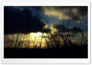 Sunset Grass HD Wide Wallpaper for Widescreen