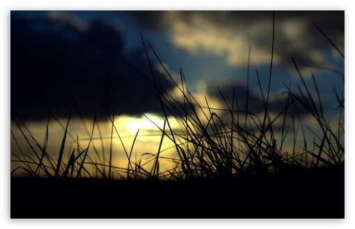 Sunset Grass HD wallpaper for Wide 16:10 5:3 Widescreen WHXGA WQXGA WUXGA WXGA WGA ; HD 16:9 High Definition WQHD QWXGA 1080p 900p 720p QHD nHD ; UHD 16:9 WQHD QWXGA 1080p 900p 720p QHD nHD ; Standard 4:3 5:4 3:2 Fullscreen UXGA XGA SVGA QSXGA SXGA DVGA HVGA HQVGA devices ( Apple PowerBook G4 iPhone 4 3G 3GS iPod Touch ) ; Tablet 1:1 ; iPad 1/2/Mini ; Mobile 4:3 5:3 3:2 16:9 5:4 - UXGA XGA SVGA WGA DVGA HVGA HQVGA devices ( Apple PowerBook G4 iPhone 4 3G 3GS iPod Touch ) WQHD QWXGA 1080p 900p 720p QHD nHD QSXGA SXGA ; Dual 16:10 5:3 16:9 4:3 5:4 WHXGA WQXGA WUXGA WXGA WGA WQHD QWXGA 1080p 900p 720p QHD nHD UXGA XGA SVGA QSXGA SXGA ;