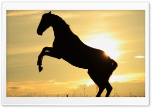 Sunset Horse HD Wide Wallpaper for Widescreen