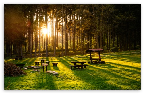 Download Sunset in the Forest HD Wallpaper