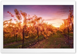 Sunset In The Russian River Valley HD Wide Wallpaper for Widescreen