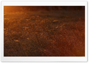 Sunset Light HD Wide Wallpaper for Widescreen