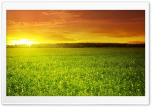 Sunset Over Bean Field HD Wide Wallpaper for Widescreen