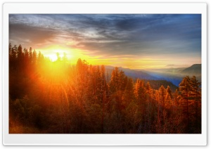 Sunset Over Forest In Yosemite HD Wide Wallpaper for 4K UHD Widescreen desktop & smartphone