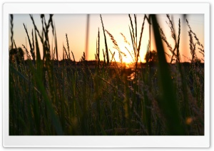 Sunset Over The Field HD Wide Wallpaper for Widescreen